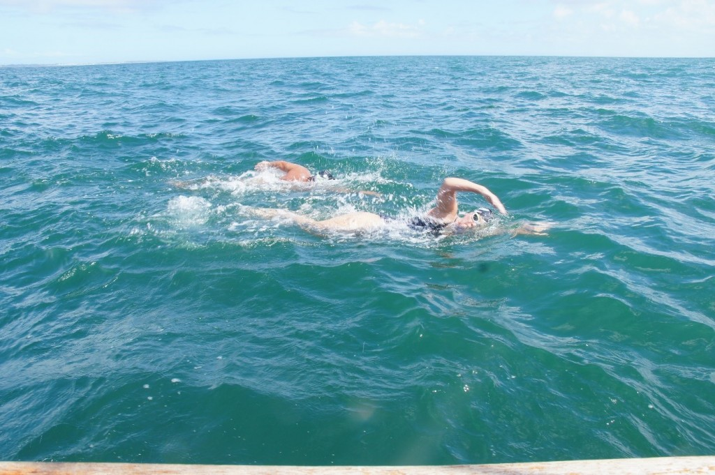 swimming robben island to cape town